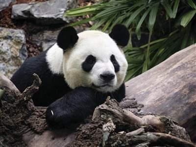 لیست مهم ترین باغ وحش های کانادا